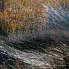 Photographie dart : Herbes 1 - Galerie photos Abstraction