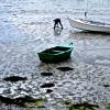 Photographie dart : Pêche à pied - Galerie photos Photographies